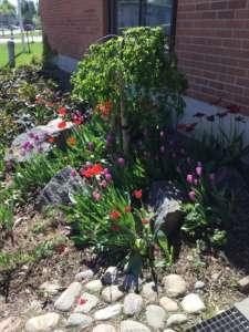 Kuvassa on kukkia kivetyksellä.