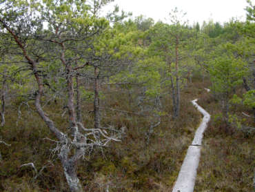Pitkospuut suomaisemassa